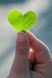 爱在植物中 图库摄影