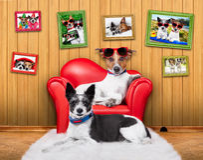 爱夫妇沙发狗 免版税图库摄影