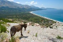 爱奥尼亚人阿尔巴尼亚的海岸 图库摄影