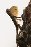 爱好者红喉刺莺的蜥蜴 库存照片