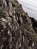 爱尔兰人岸岩层 库存照片