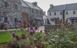 爱尔兰农村风景 图库摄影
