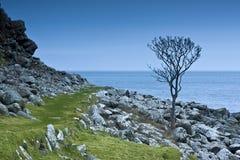 爱尔兰北结构树 免版税库存照片