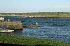 爱尔兰孤独的海鸥 免版税图库摄影