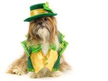 爱尔兰小狗 免版税库存照片