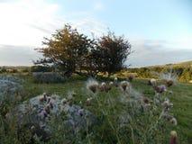 爱尔兰山农场土地 免版税图库摄影