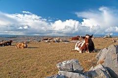 爱尔兰横向农村风景充满活力 库存图片