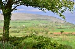 爱尔兰横向 库存图片