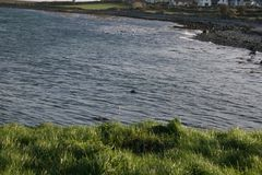 爱尔兰水 免版税库存照片