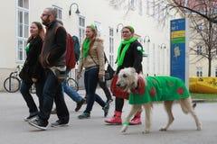 爱尔兰狼猎犬佩带的三叶草外套 免版税库存照片