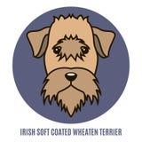爱尔兰软的上漆的小麦狗画象  传染媒介illustrati 免版税库存照片