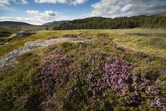 爱尔兰peatland 库存图片