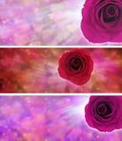 爱心脏和玫瑰色网站横幅 免版税图库摄影