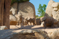 爱恋的大象 免版税库存照片