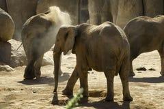 爱恋的大象 图库摄影