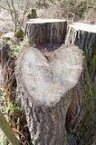 爱恋的自然心脏形状 库存图片