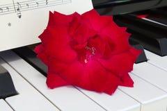 爱情歌曲概念在琴键的红色玫瑰 免版税图库摄影