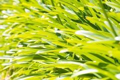 爱情花植物叶子  免版税库存照片