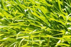 爱情花植物的叶子 免版税库存照片