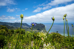 爱情花花和Penha de A?  guia或老鹰岩石,马德拉岛,葡萄牙 免版税库存照片