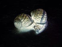 爱慢的蜗牛 库存照片