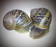 爱慢的蜗牛 库存图片