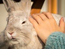 爱抚一只白色兔子的孩子的手 库存照片