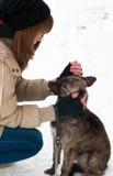 爱抚被放弃的狗的十几岁的女孩 免版税库存图片