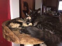 爱拥抱小猫 免版税库存照片