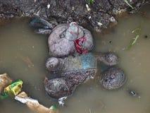 爱拥抱泥泞的水坑玩具 免版税库存照片