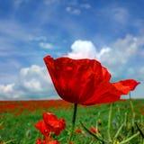 爱是您得到让种植的花 免版税图库摄影