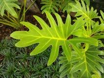 爱树木的人元上都叶子 免版税库存照片