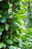 爱树木的人在雨林树的树干离开 图库摄影