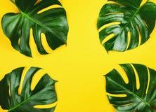 爱树木的人在黄色的monstera叶子 免版税库存照片