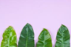 爱树木的人热带叶子 库存图片