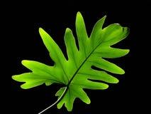 爱树木的人照明 免版税库存照片