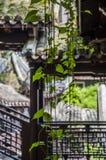 爱树木的人 图库摄影