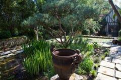 爱水的植物 免版税库存图片