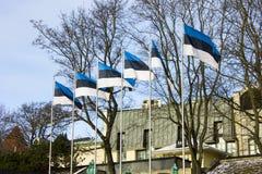 爱沙尼亚的旗子 免版税库存图片