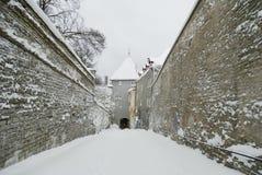 爱沙尼亚老塔林冬天 免版税库存图片