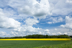 爱沙尼亚语农村风景 库存图片