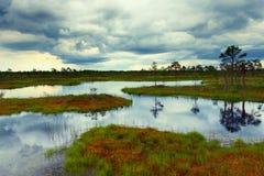 爱沙尼亚语的沼泽 库存图片