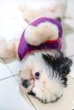 爱犬是逗人喜爱和嬉戏的 免版税图库摄影