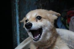 爱犬 库存照片