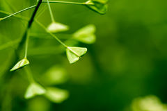 以爱的形式,绿色离开,宏指令的标志 免版税图库摄影