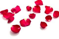爱的标志与上升了, valentin的天 免版税库存图片