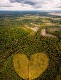 爱的概念对自然的 保重并且享用森林 免版税库存图片