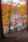爱知, - 11月23日:人人群红色桥梁的有五颜六色的Aut的 免版税库存图片