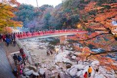 爱知, - 11月23日:人人群红色桥梁的有五颜六色的Aut的 免版税图库摄影