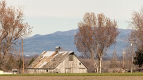 爱达荷农场的老木谷仓有两座树和山的跑了 免版税库存照片